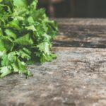 Plant friske krydderurter i vægdrivhuse